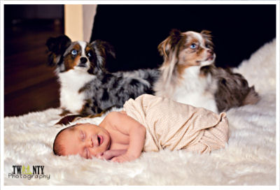 Baby Bear shares his photo shoot with the family's puppy dogs