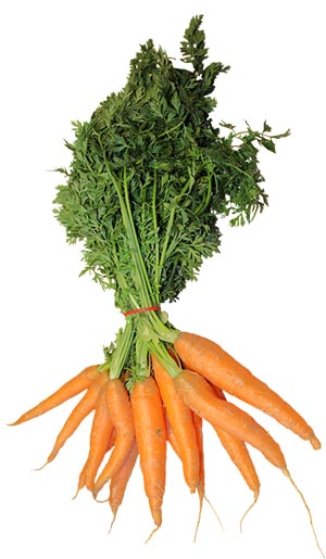 Bunch of carrots for Easter Bunny baby picture prop ideas