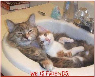 SEE MORE PICTURES of BUDDIES JUST LIKE THESE HERE !!!!